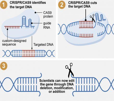 Jennifer Doudna's CRISPR discovery.